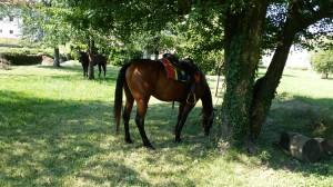 paarden_rust