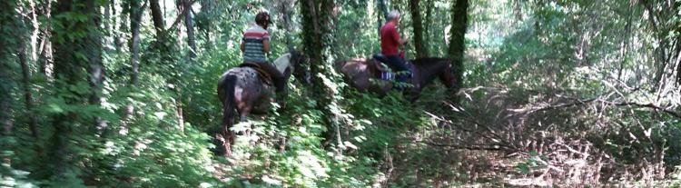paardrijden_door_bos