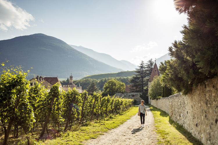 Wandelen Zuid Tirol langs wijngaard © IDM Süd Tirol