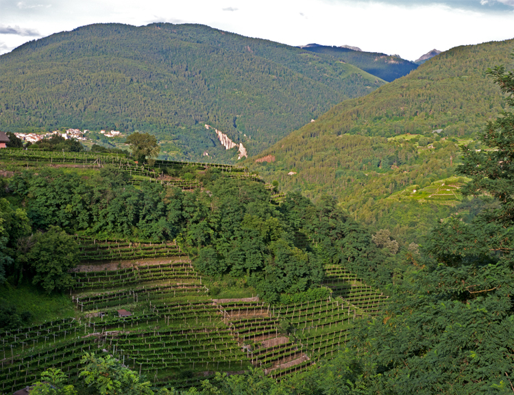 Wijngebied Valle di Cembra