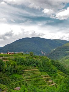Wijnen uit Val di Cembra